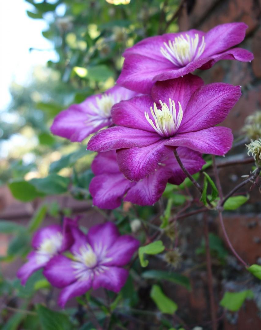 Eximia Garden Design Fees